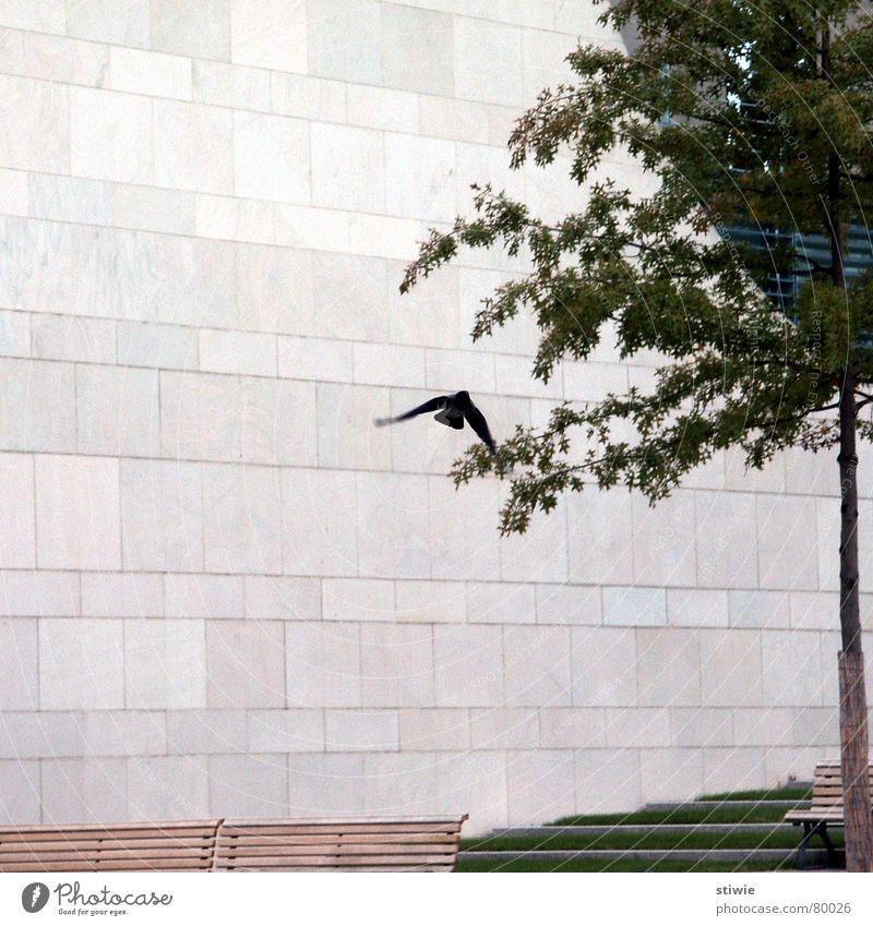 flieg vogel, flieg! Vogel Baum Wand Mauer modern fliegen Flügel bird brick fly tree wings stone