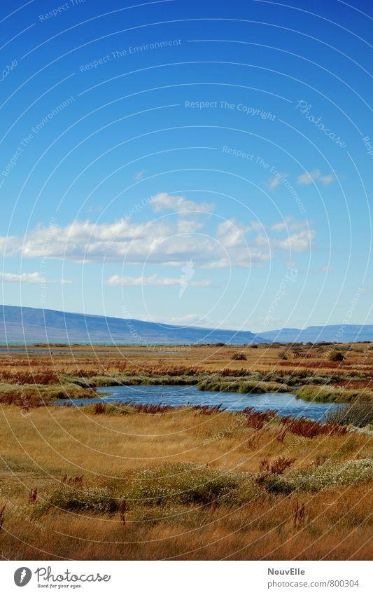 El Calafate. Natur Landschaft Tier Erde Luft Himmel Wolken Sonne Herbst Klima Schönes Wetter Feld Berge u. Gebirge Seeufer außergewöhnlich Duft weich blau gelb