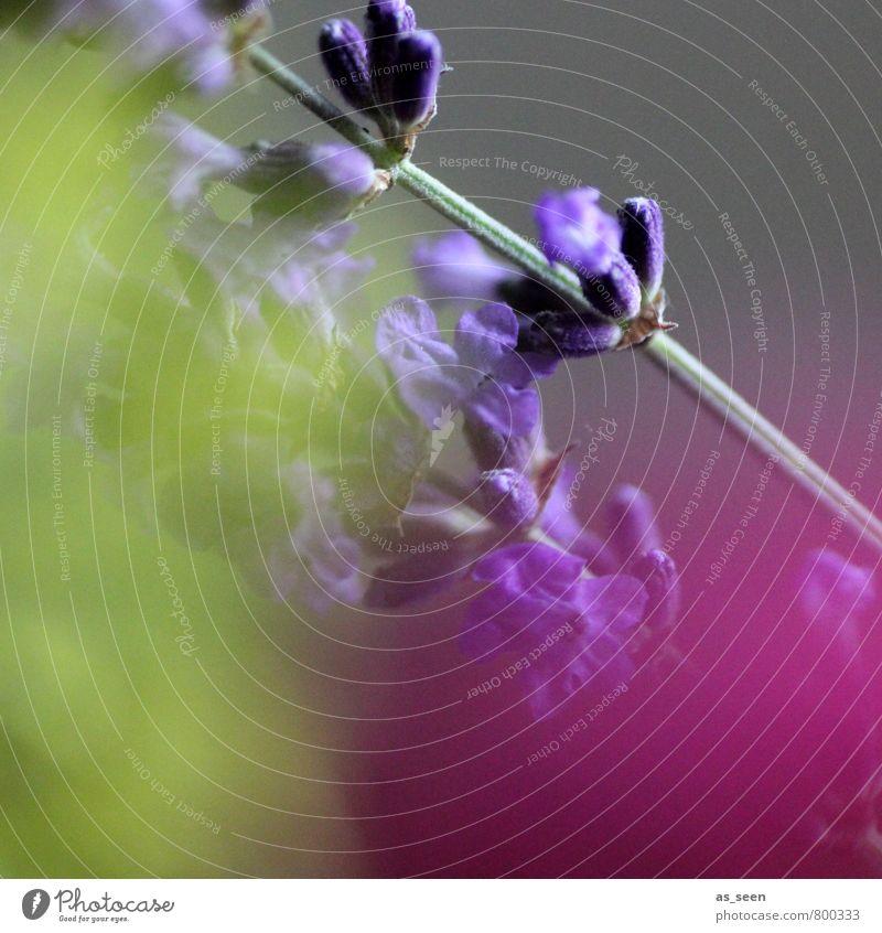 komplementär II Natur Pflanze schön Farbe Blume ruhig gelb Blüte Stil Mode rosa Wachstum leuchten Dekoration & Verzierung ästhetisch Kreativität