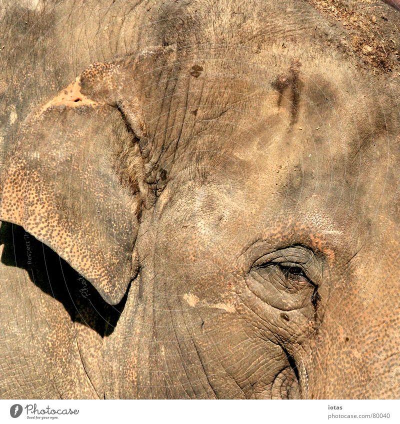 teint II schön rot schwarz Auge Wärme Sand Haut mehrere viele Ohr Physik heiß Falte Konzentration Zoo dick