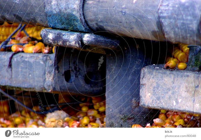 EISERNE RESERVE blau gelb Metall liegen Landwirtschaft Getreide Ernte reif Eisen Futter Mais Speicher Reifezeit Gußeisen Maiskolben