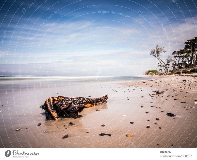 Gestrandet blau weiß Wasser Baum Meer Wolken Strand gelb Küste Sand Horizont Wellen Baumstamm Ostsee Darß Strandgut