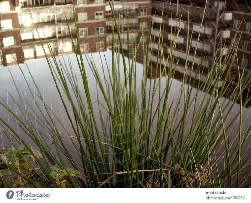 6 FEET UNDER Romantik Baum Winter Herbst kalt grau Kitsch Blatt grün Wäldchen Baumstamm Nebel dunkel Wildnis hart Gefühle Schwärmerei Umwelt frisch Natur