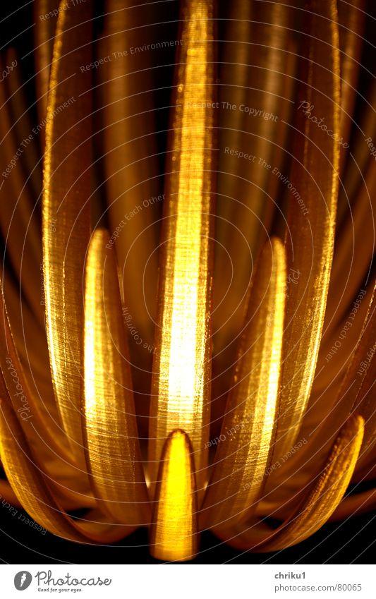 Lichtausschnitt Lampe dunkel Blüte hell Beleuchtung Kunst Technik & Technologie Kunststoff Skulptur Kunsthandwerk Lampenschirm Indien Lichtschein Lichtstrahl