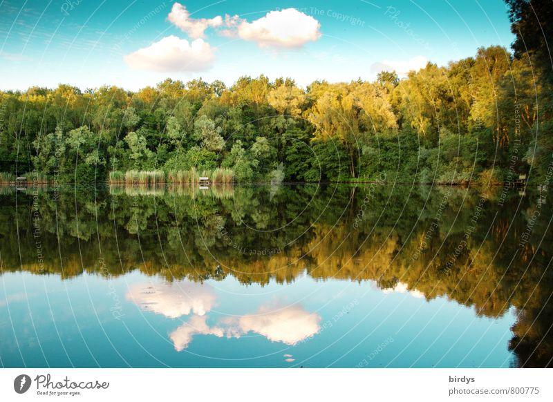 Idyll Himmel Frühling Sommer Schönes Wetter Wald Seeufer Teich ästhetisch positiv schön gelb grün türkis Erholung Idylle Natur ruhig Wolken Schilfrohr Farbfoto