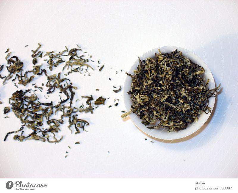 weißer Tee China Teepflanze Chinesisch Teedose Teekultur