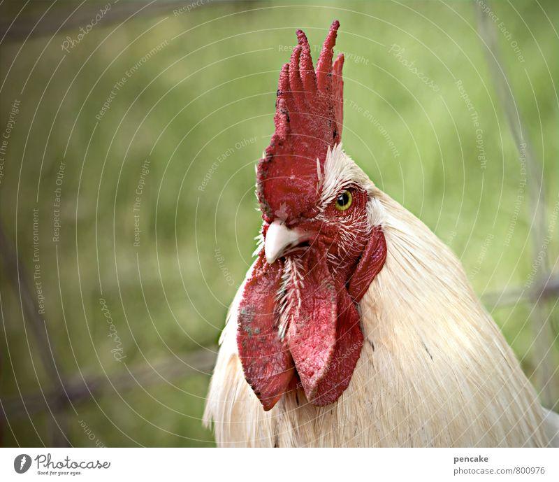 der begegner Natur Sommer Tier Frühling Gras Feld Angst Erfolg Kommunizieren Zeichen Partnerschaft Haustier Frankreich Schnabel Aggression Konkurrenz