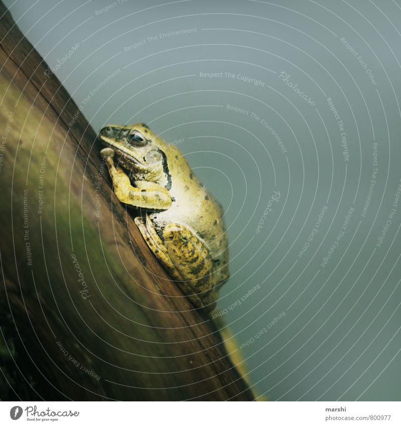 im Tiefschlaf Natur Tier Stimmung schlafen Frosch Froschlurche Kröte
