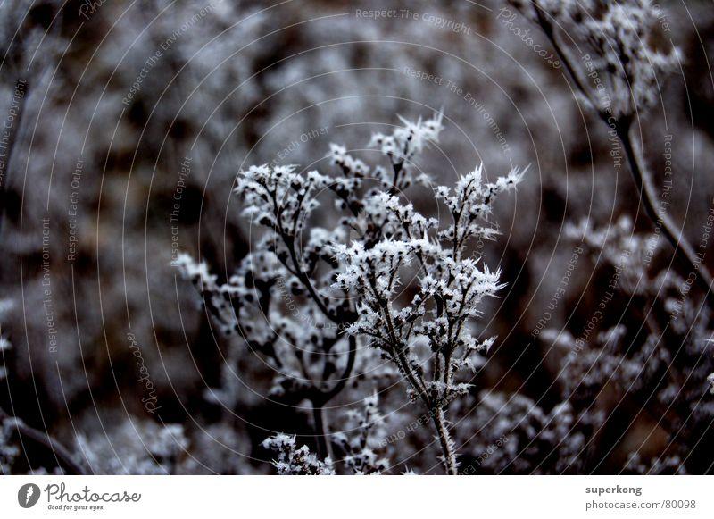 016 Schneesturm gefroren kalt ungemütlich Eischnee Schneehütte Schneeschmelze Winter Ast blau Natur winterschlaf