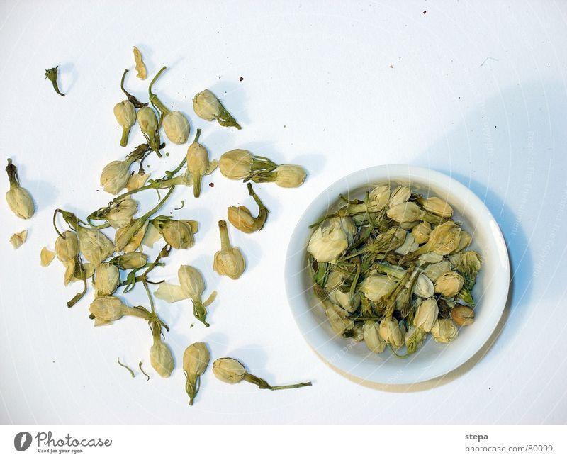 Jasminblüten Tee weiß China Teepflanze Originalität Chinesisch ursprünglich Vegetarische Ernährung Teedose Teekultur