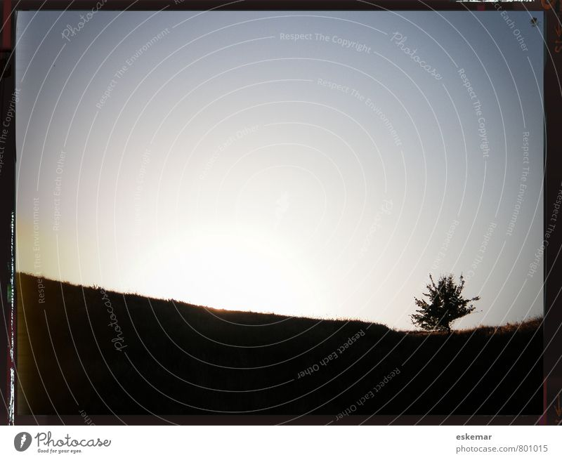 single tree Himmel Natur Ferien & Urlaub & Reisen Pflanze Sommer Baum Einsamkeit ruhig Landschaft Umwelt Wiese Freiheit Horizont Idylle Zufriedenheit einzeln