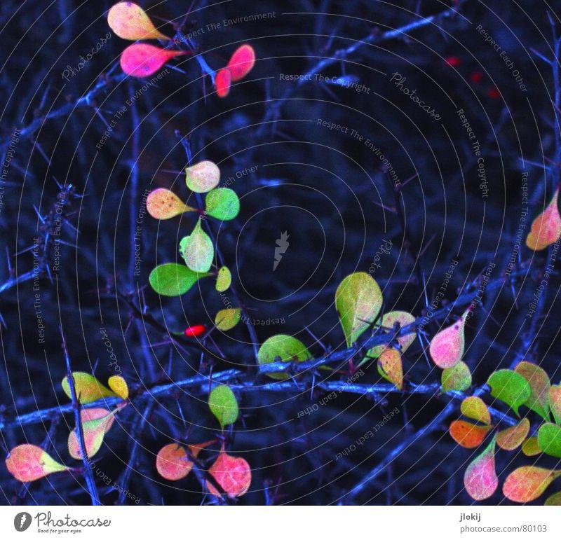 The Last grün blau Sommer Winter Blatt dunkel kalt Herbst frisch trist fallen Jahreszeiten Stachel Saison Dorn
