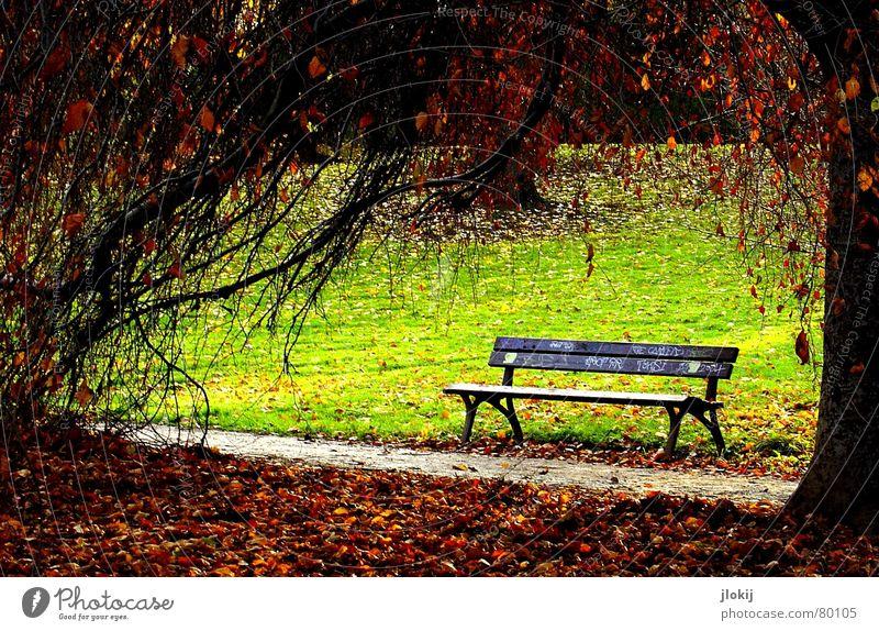 Volksbank Erholung Park Holz Baum Wiese grün Blatt durcheinander genießen Sonnenstrahlen Herbst Jahreszeiten Physik Spaziergang Umwelt Gras ruhen Baumstamm