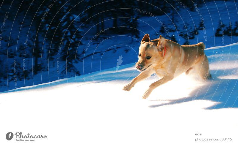 Hols Stöckchen Hund Winter kalt Spielen Tier springen Säugetier laufen Bewegung Schnee Stock Gassi gehen