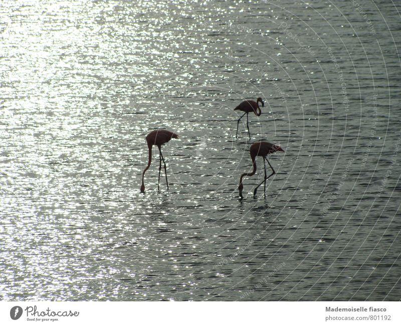 Trio auf sechs Stelzen Natur Ferien & Urlaub & Reisen schön Wasser Erholung ruhig Landschaft Tier Umwelt grau Idylle elegant Zufriedenheit frei stehen