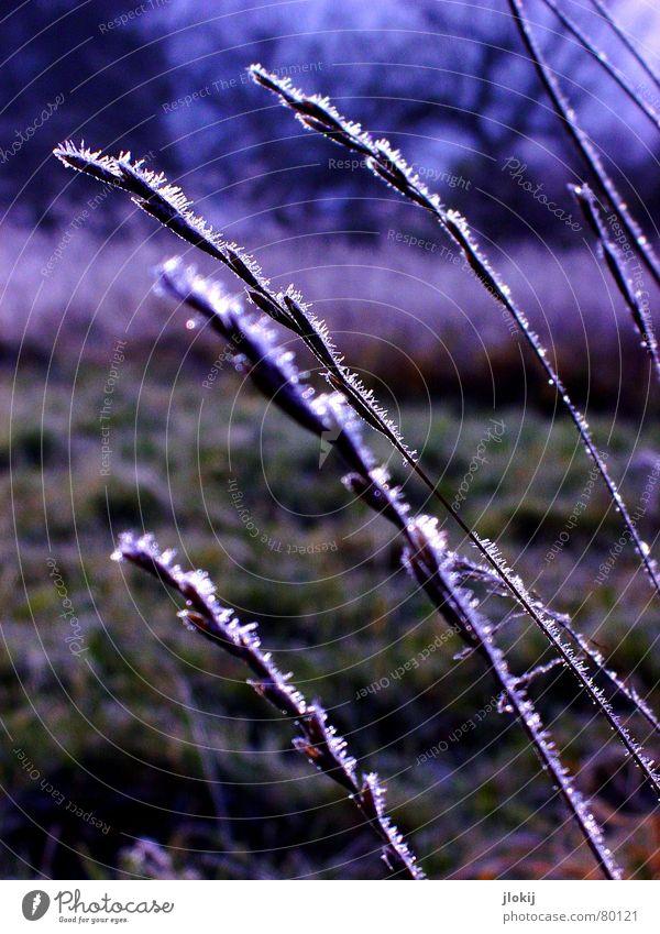 Here too Natur Baum grün Pflanze Winter dunkel kalt Schnee Wiese Gras Eis Feld Frost Rasen frieren feucht