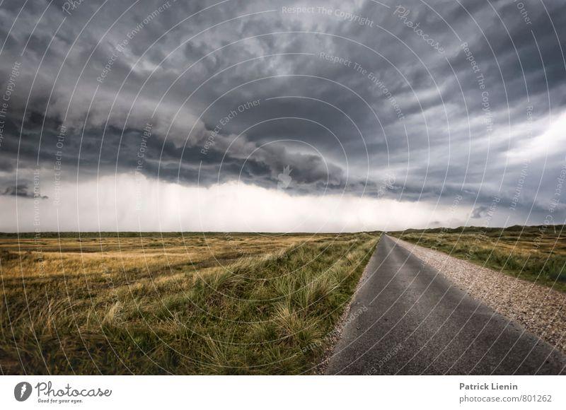 Wettervorhersage Umwelt Natur Landschaft Urelemente Luft Himmel Wolken Gewitterwolken Klimawandel schlechtes Wetter Unwetter Wind Sturm Pflanze Traurigkeit