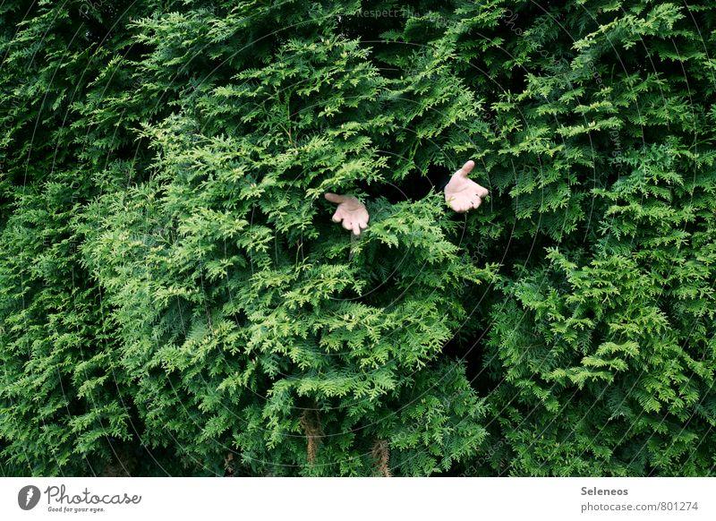 Fleischfresser Mensch Hand Finger 1 Umwelt Natur Pflanze Baum Hecke Garten Park natürlich grün verschlingen verstecken Farbfoto Außenaufnahme Textfreiraum links