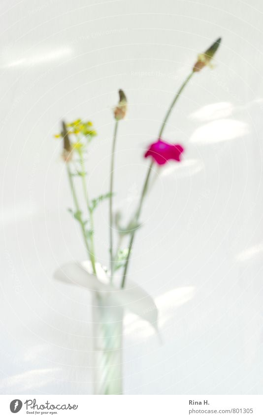 OOF Blume hell Blühend Kräuter & Gewürze Blumenstrauß Vase verblüht