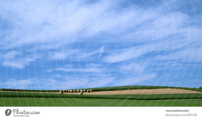 wind & wolken Forke Strohfeuer Freiheit Wolken Luft Himmelskörper & Weltall Baum Gras Ackerbau atmen Baumstamm Weide Sportrasen Wiese Grünfläche Baumstruktur