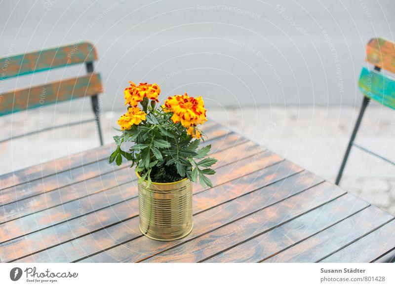UT DD I sitzgelegenheit sitzen Tisch genießen Stuhl Café Sitzgelegenheit Holztisch sommerlich Blumentopf Treffpunkt Holzstuhl