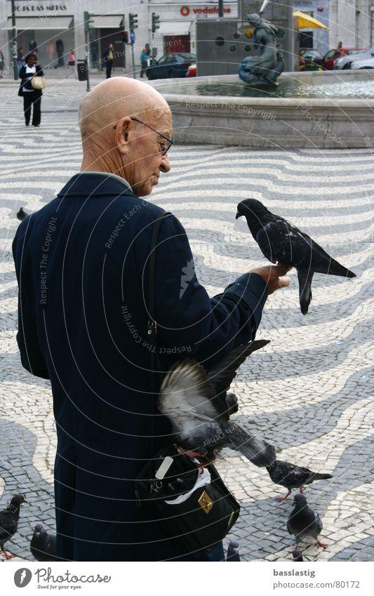 der taubenflüsterer Mann Ferien & Urlaub & Reisen Vertrauen Taube Glaube Marktplatz füttern Lissabon Flüstern
