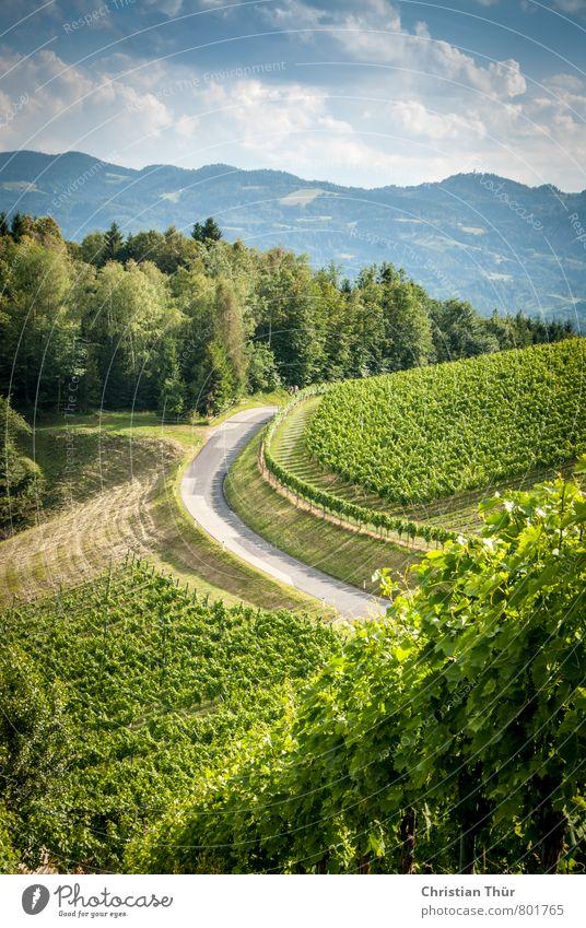 Weinberge Südsteiermark Natur Ferien & Urlaub & Reisen blau grün Sommer Sonne Baum Erholung ruhig Wald Umwelt Gefühle grau Zufriedenheit Tourismus Fröhlichkeit