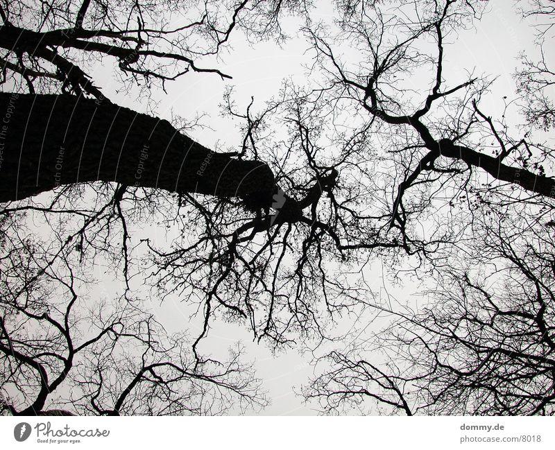 Baumader Baum Winter Spitze Zweig Gefäße