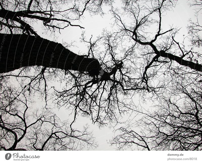 Baumader Gefäße Winter Spitze Zweig kaz