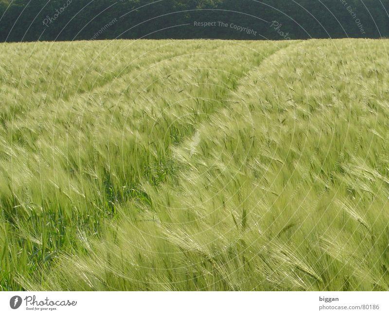 Ein Bett im Kornfeld? schön Freude Leben dunkel Freiheit Glück hell Wind Erinnerung Unbekümmertheit
