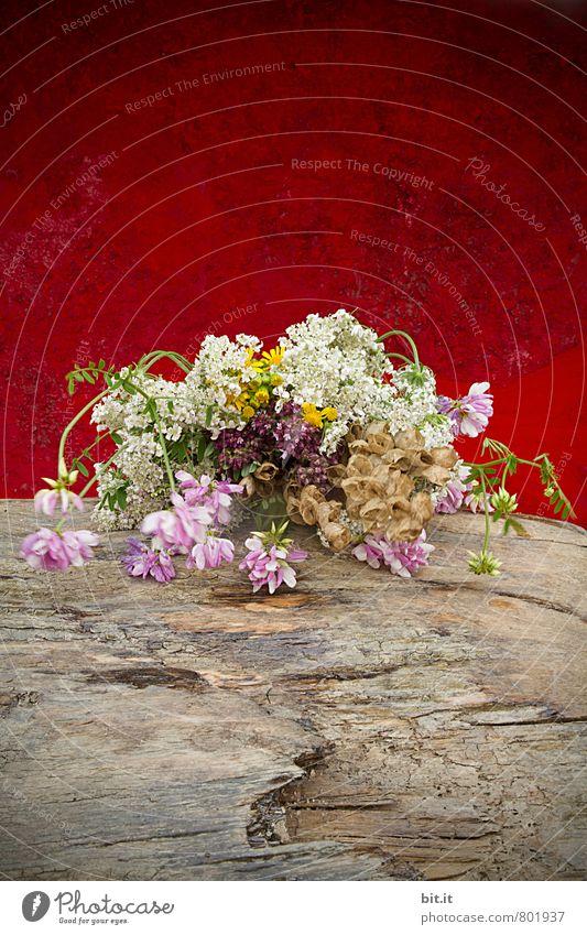 stille Gewächse Natur Pflanze Sommer rot Blume ruhig Blüte Frühling Holz Glück Feste & Feiern Stimmung Lifestyle Häusliches Leben Zufriedenheit