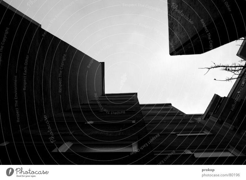 Hoffnung... Haus Hinterhof Baum eng Froschperspektive dunkel trist Verzweiflung Sozialer Brennpunkt Langeweile Trauer krisenherd sinnlos krisengebiet
