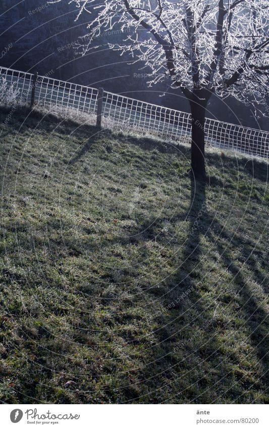 schräg Gras Morgen frisch Baum Zaun grün Hügel Trauer Außenaufnahme Schatten steil verdunkeln Baumstamm Grasland Wiese Viehweide Grenze Schattendasein kalt