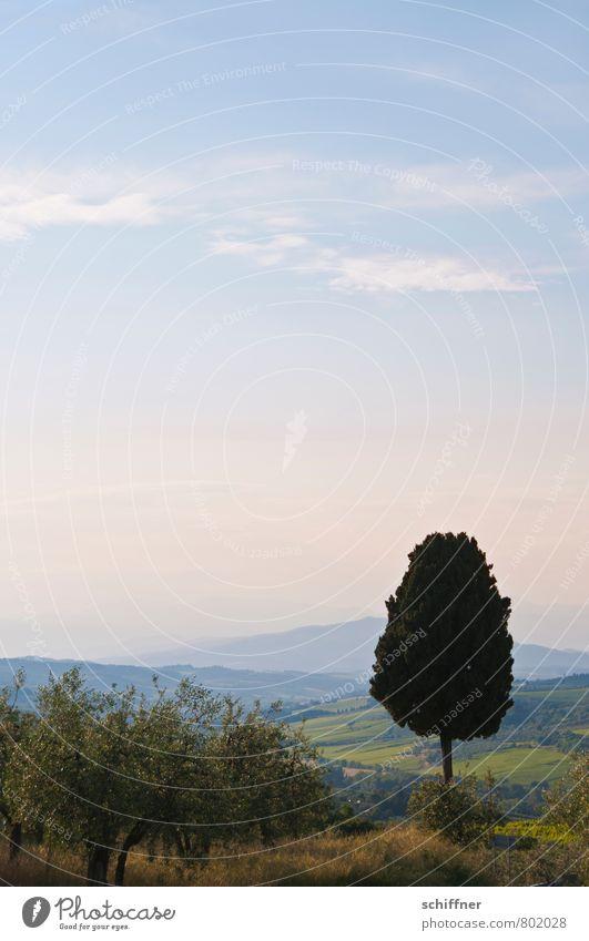 Eis am Stiel, Lakritz Landschaft Himmel Sommer Klima Schönes Wetter Pflanze Baum Hügel Berge u. Gebirge blau einzeln 1 Landschaftsformen Toskana Italien Chianti