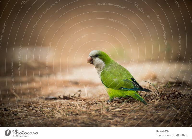 TARNUNG - defekt = VÖGLEIN - entdeckt Natur schön grün Farbe Sommer Tier Wald klein gehen Vogel Park Erde Flügel beobachten niedlich Neugier