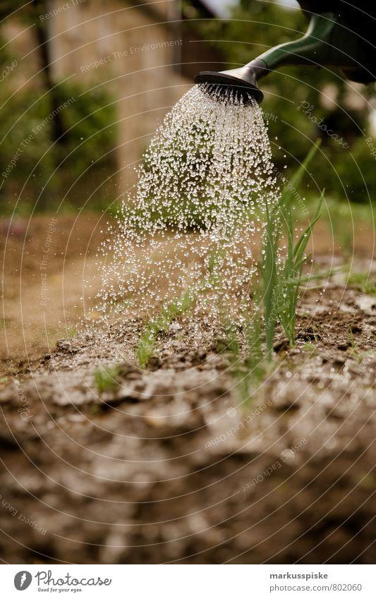 giessen Pflanze Wasser Haus Freude Gesunde Ernährung Leben Glück Gesundheit Garten Lebensmittel Wohnung Wachstum Häusliches Leben Frucht Zufriedenheit