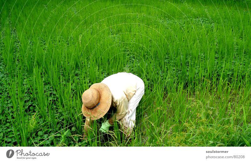 Unkrautvernichter Reisfeld Zeitarbeit Stress Versuch Überarbeitung Proletarier Überfordern Gras Wiese grün Mann Arbeiter Feld Asien Japan Ernährung