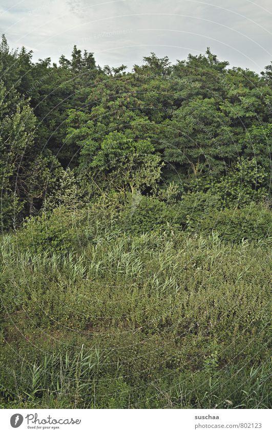 voll natur II Umwelt Natur Landschaft Pflanze Himmel Sommer Baum Sträucher Wald grün Grünpflanze bewachsen Grünfläche Farbfoto Gedeckte Farben Außenaufnahme