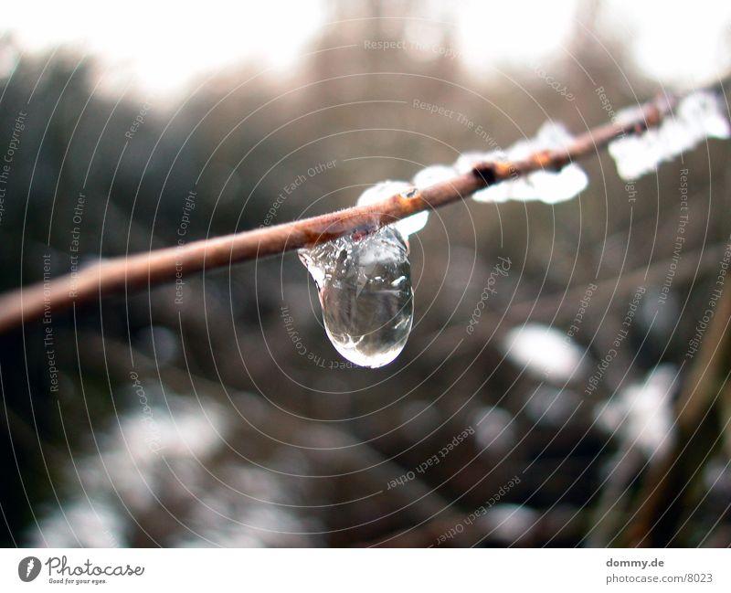Eistropfen Reflexion & Spiegelung Schnee Ast Wassertropfen Klarheit kaz