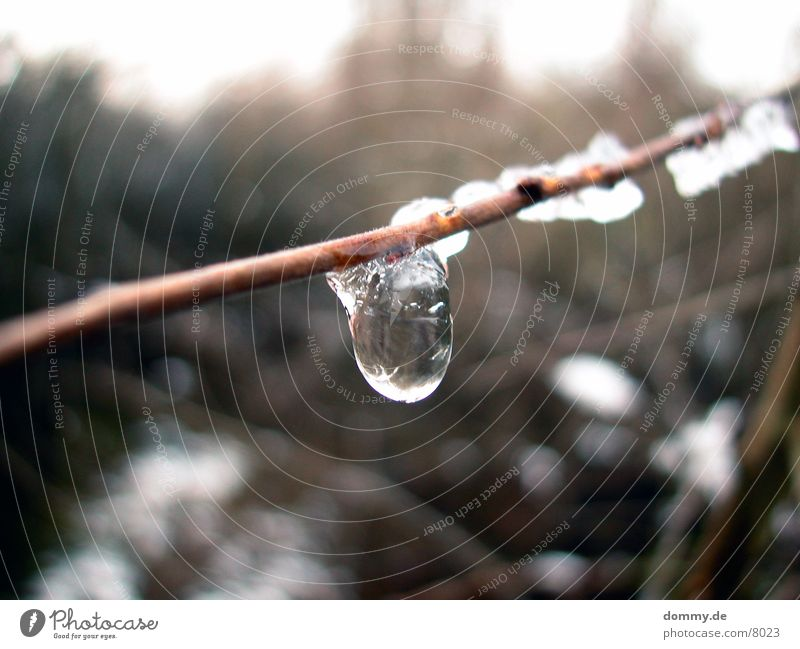 Eistropfen Schnee Wassertropfen Klarheit Ast