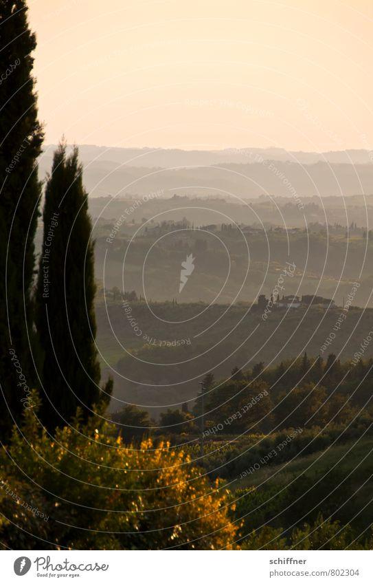 Chianti mio II Natur Pflanze Baum Landschaft Ferne Umwelt rosa Schönes Wetter Aussicht Italien Hügel Toskana Pinie Zypresse
