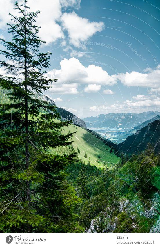 Wendelstein Himmel Natur Ferien & Urlaub & Reisen blau grün Sommer Sonne Landschaft Wolken Wald Umwelt Berge u. Gebirge natürlich Felsen Idylle Sträucher