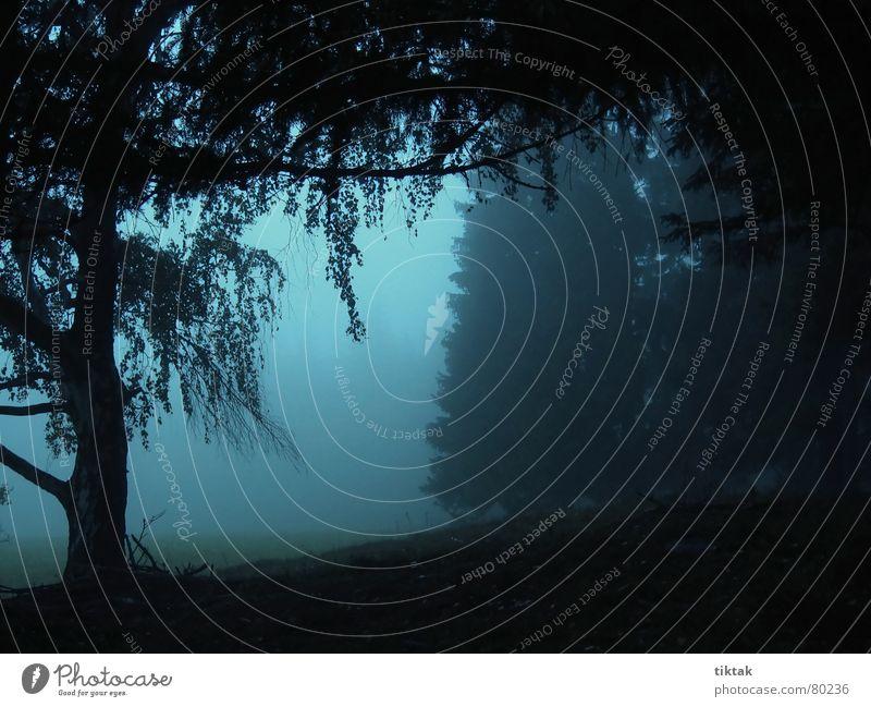 Huh Huh Fichte Waldlichtung Baum Tanne Birke ruhig unheimlich grauenvoll gruselig dunkel Nebel Herbst Waldwiese Nadelwald schweigen Nebelschleier