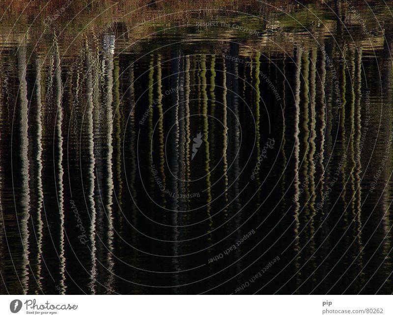 Stille Wasser schwarz dunkel See Küste nass tief Teich Spiegelbild Gewässer Oberflächenspannung