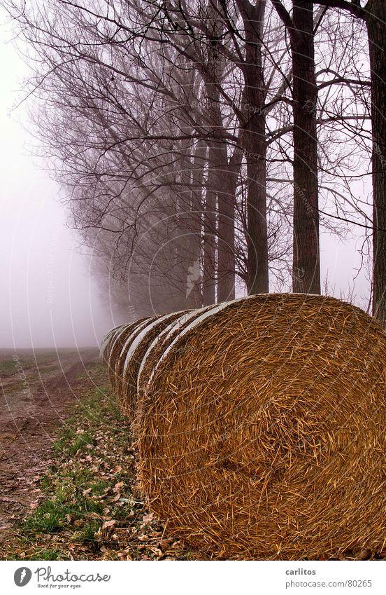 Röllchen nach dem Fest ... Winter dunkel Herbst Traurigkeit Nebel Spaziergang Langeweile Herbstbeginn Morgennebel Baumreihe Strohrolle