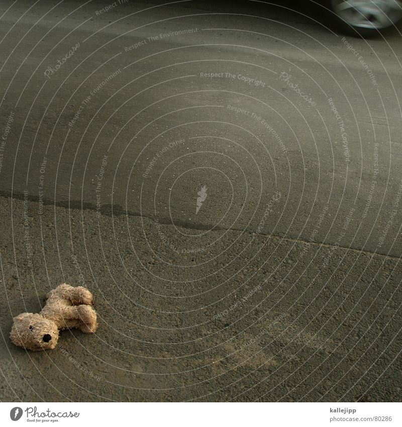 schule hat begonnen Stofftiere Straßenverkehr Ausfall Unfall gefährlich Hund Teddybär Tod PKW Wachsamkeit Vorsicht Warnsignal KFZ achtsam Kiste aussetzen Leiche