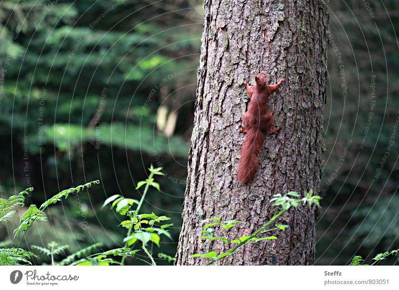 Jetzt aber schnell! Natur Sommer Baum Tier Wald Bewegung Freiheit Zufriedenheit wild Wildtier Geschwindigkeit niedlich Lebewesen Baumstamm rennen Momentaufnahme