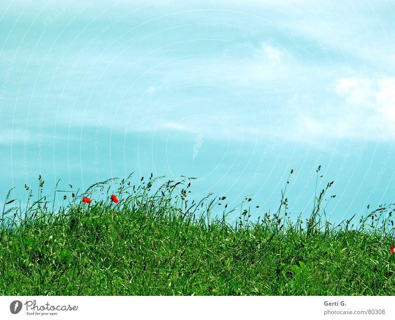 sunny meadow Himmel grün blau rot Sommer Wolken Wiese Gras Berge u. Gebirge Wind frisch Rasen Aussicht Hügel Mohn Lust
