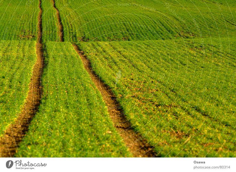 Feldweg grün Ferne Wiese Wege & Pfade Wellen Spuren Hügel Weide Fußweg Gemüse Fahrbahn Grünpflanze wegfahren Fährte Blattsalat