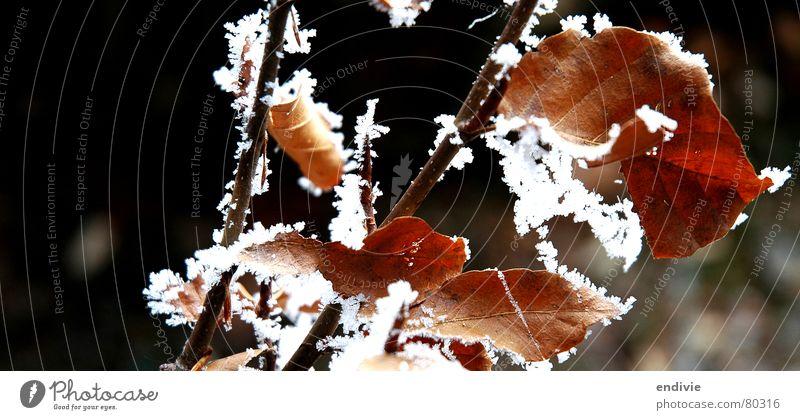 Frost Natur Baum Winter Blatt kalt Schnee Eis gefroren Zweig